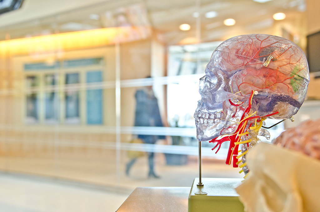Макет на мозък - Снимка